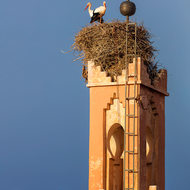 Stork couple on minaret.