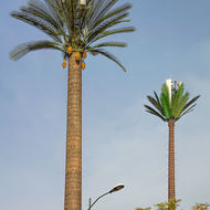 Cell phone towers disguised as date palms.