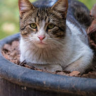 Cat in a planter: well, it's cool.