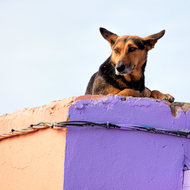 Top dog; on the roof.
