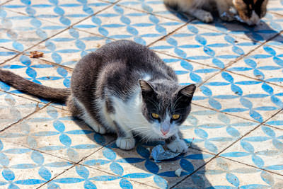 Thumbnail image ofCats, eating something from aluminum foil.