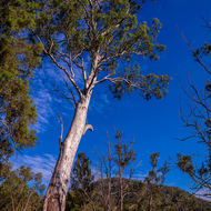 Reach for the sky in the Condamine Gorge.