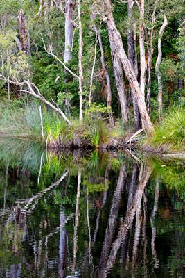 Thumbnail image ofReflections.