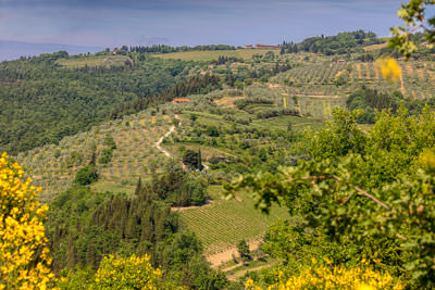 Thumbnail image ofOlive groves and grapevines around the village...