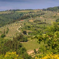 Olive groves and grapevines around the village of Greve in Chianti.