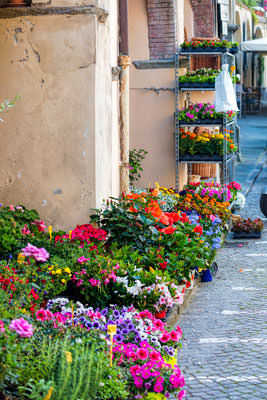 Thumbnail image of Flowering plants for sale in the Piazza.