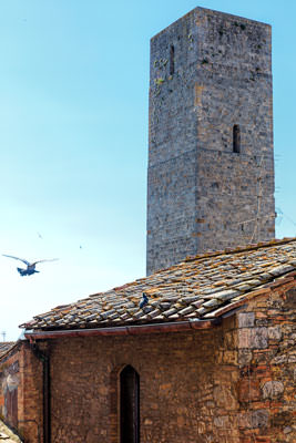 Thumbnail image of Bird heading towards Torre Becci.