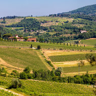 Valley of Tuscan grapes.
