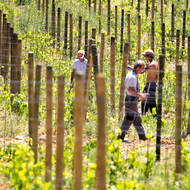 Workers toiling in the vineyard.