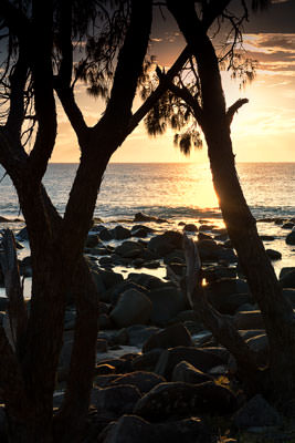 Thumbnail image ofCoastal trees silhouetted by the rising sun.