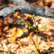 New life emerges after forest burn.