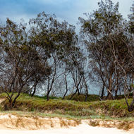Beachfront trees.
