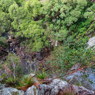 Anyone for vertigo?  Minyon Falls looking down.