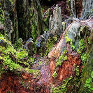 Tree stump, almost abstract.