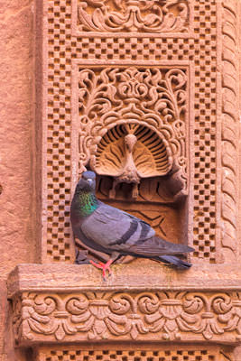 Thumbnail image ofPerched pigeon and decorative peacock.