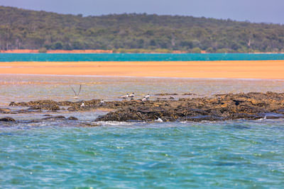 Thumbnail image of Low tide, plenty to eat.