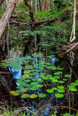 Thumbnail image ofBillabong reflections.