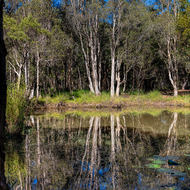 Billabong reflections.