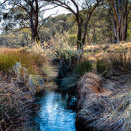 Grasses and eucalypts around Polblue Swamp.
