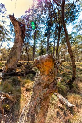 Thumbnail image ofPolblue Swamp.