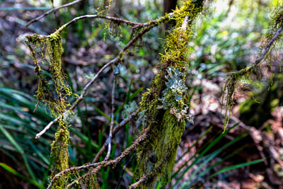 Thumbnail image ofLichen and mosses abound along walking trails.