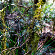 Lichen and mosses abound along walking trails.