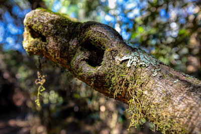 Thumbnail image ofLichen and moss heads up.
