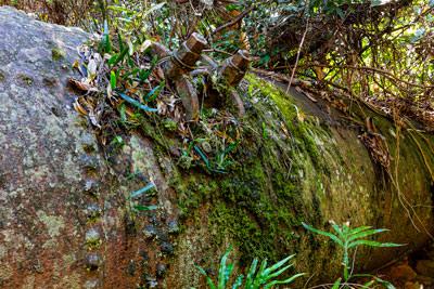Thumbnail image ofRainforest reclaims boiler from Hidden Treasure...
