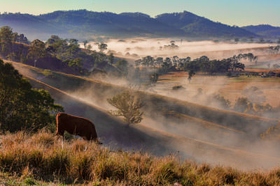 Thumbnail image ofEarly morning mist hanging in the valley.