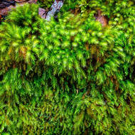 Verdant mosses in the rainforest.